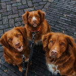DutchTollers2-e1587549239789_L