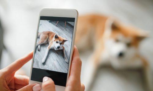 Hond en camera